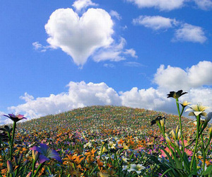 heart, clouds, and flowers image