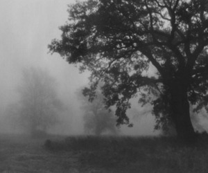 black and white, tree, and Darkness image