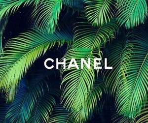 chanel and palmeras image