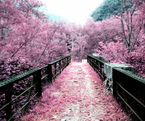 pink, flowers, and bridge image