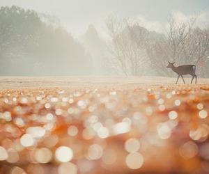 animal, fall, and glisten image