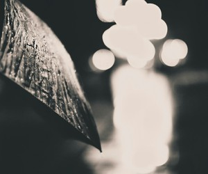 b&w, photography, and umbrella image