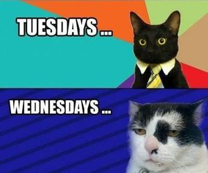 cat, funny, and week image