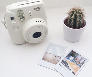 cactus, pale, and clean image