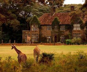 giraffes, house, and outdoors image