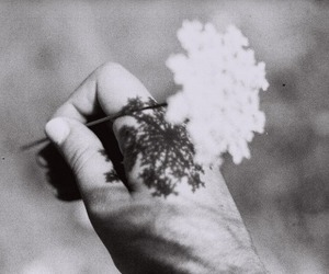 flowers, black and white, and vintage image