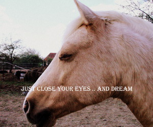 Dream, cute, and horse image
