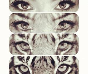 tiger, eyes, and girl image