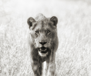 africa, photography, and wildlife image