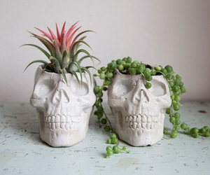 skull, plants, and green image