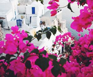 Greece, flowers, and summer image