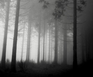 black and white, fog, and forest image