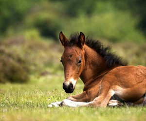 horse and little image