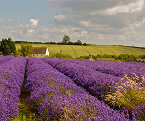 cotswolds, country, and field image