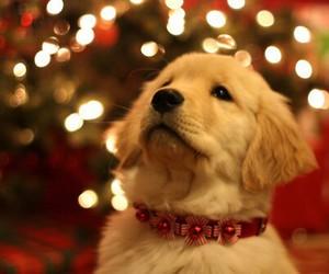 chrismas, perros, and diciembre image