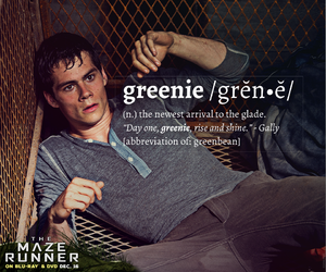 the maze runner, thomas, and greenie image