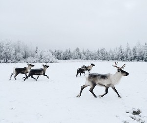 winter, animal, and nature image