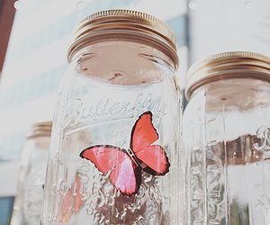 butterfly and jar image