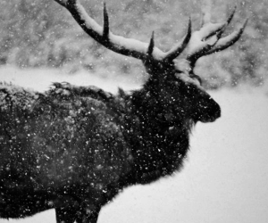 black and white, nature, and snow image