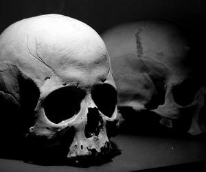 skull and dark image
