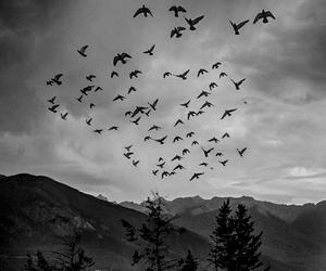 birds, black and white, and dark image