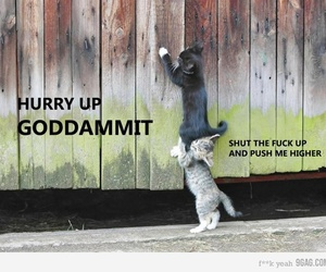 cats and funny image