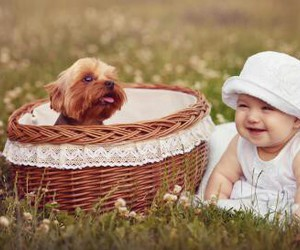 baby, dog, and animal image