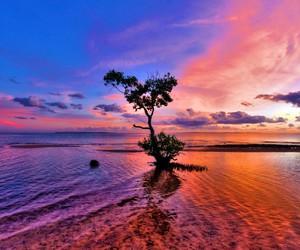 sunset, tree, and sea image
