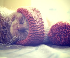 cats, lovely, and winter image