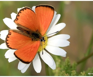 butterflies, flowers, and butterfly image