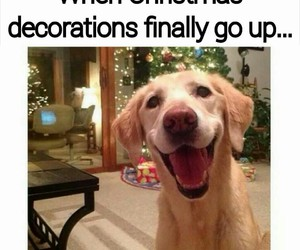 christmas, dog, and decoration image