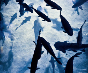 fish, blue, and water image