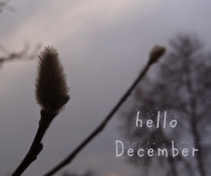 december, hello, and photograph image
