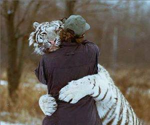 tiger, hug, and animal image