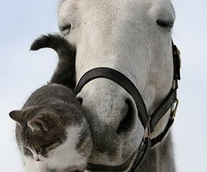 horse, cat, and friends image