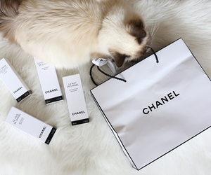 chanel, cat, and luxury image