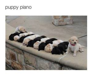 puppy, cute, and piano image