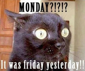 monday, cat, and friday image