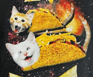 tacos, cat, and crazy image