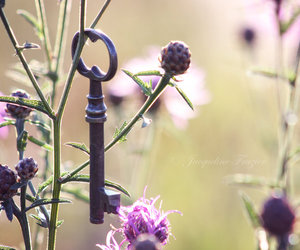 flowers, key, and photography image