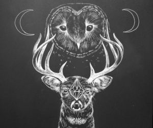 art, black, and owl image
