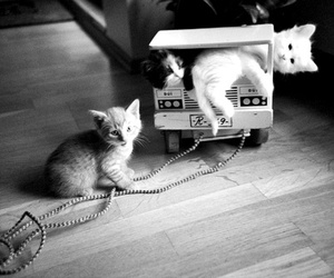 animals, cute, and black and white image