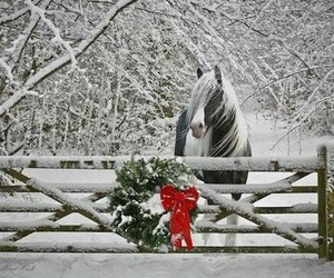horse, winter, and red ribbon image