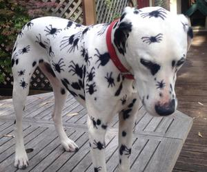 dog, spider, and funny image