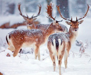 animals, forest, and snow image