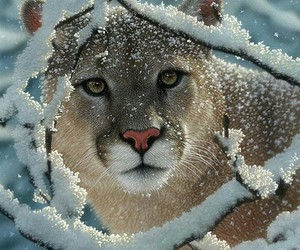 animals, beauty, and snow image