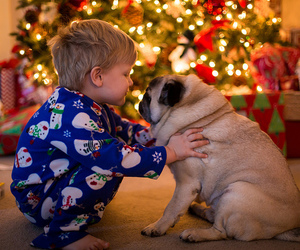 christmas, dog, and pug image