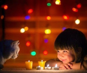 cat, lights, and child image