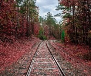 fall, photography, and tracks image