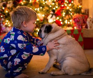 christmas, dog, and pug image